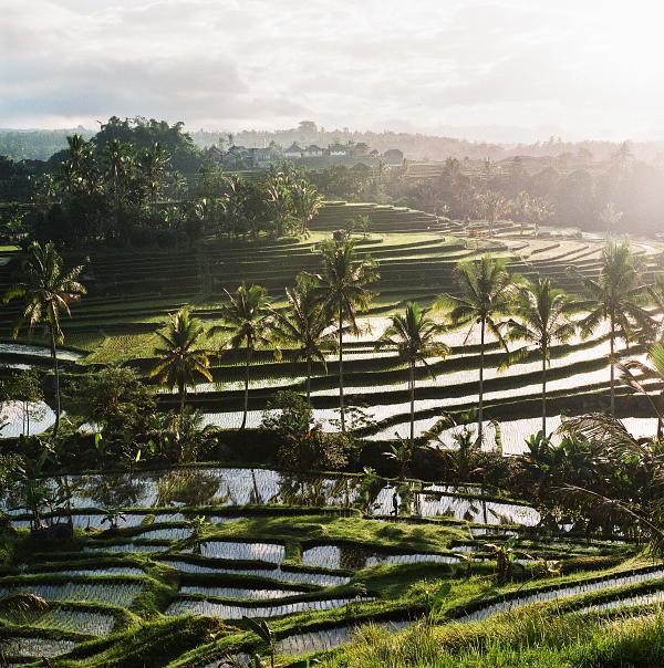 08.2014_ Bali (Indonesia): Bali, a hollow portrait